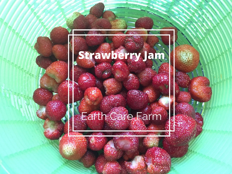 Earth Care Farm Strawberry Jam