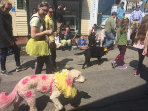 Daffy Dog Parade in Newport 2018