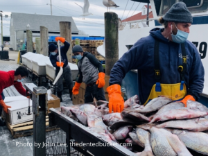 Buy Local Rhode Island Fish
